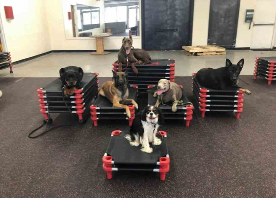 Dog boarding at Glass City K9 LLC at our Toledo Ohio location.