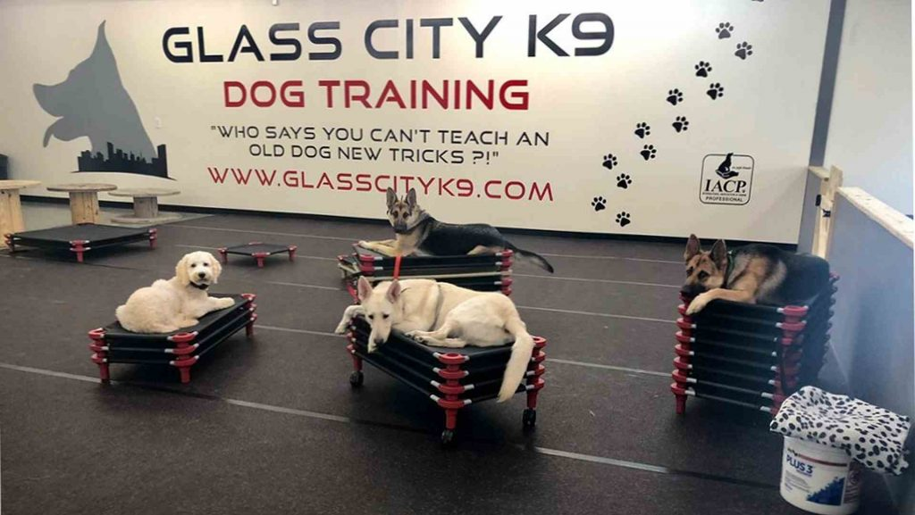 Dog training class at Glass City K9 in Toledo, Ohio.